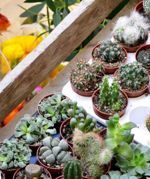 A selection of the plants from Isherwood & Co
